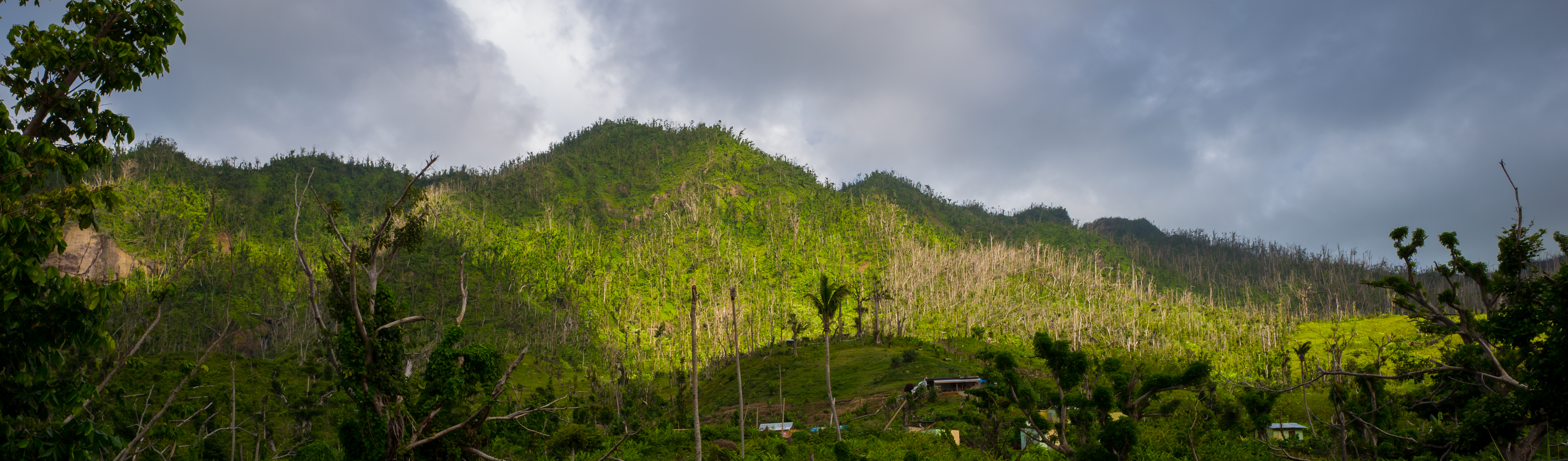 Dominica's woodlands and forests are slowly recovering.